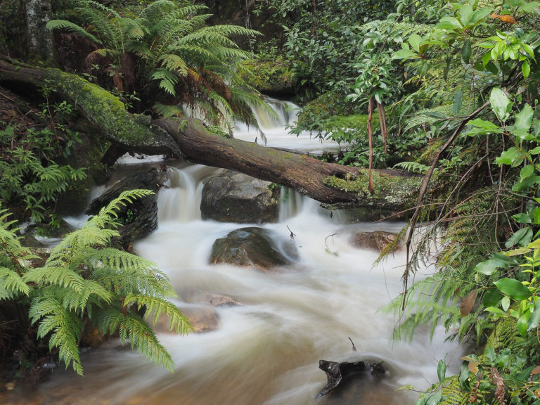 A Megalong Valley Waterfall in full flight